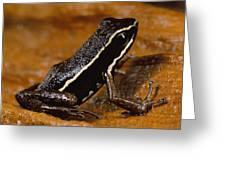 Poison Dart Frog Portrait Amazonian Greeting Card