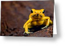 Poison Frog Greeting Card