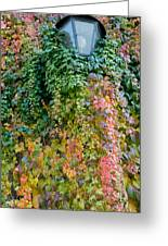 Poison Ivy Leaves Around Old Lantern Greeting Card