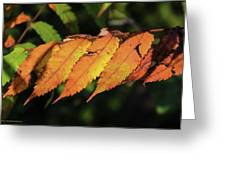 Poison Sumac Golden Kickoff To Fall Colors Greeting Card