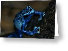 Poisonous Blue Frog 02 Greeting Card