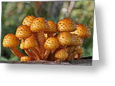 Poisonous Looking Mushrooms Greeting Card