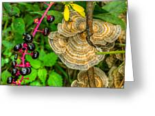 Poke And Bracket Fungi Greeting Card