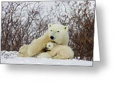 Polar Bear And 3 Month Old Cubs Greeting Card