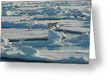 Polar Bear And Her Cub Greeting Card