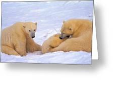 Polar Bear Chew Toy Greeting Card