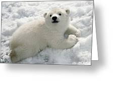 Polar Bear Cub Playing In Snow Alaska Greeting Card