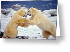 Polar Bear Dance Greeting Card