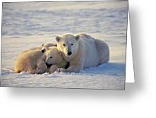 Polar Bear Family Nap Greeting Card