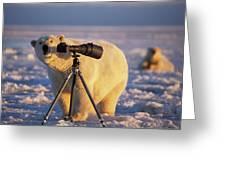 Polar Bear Investigating Photographers Greeting Card