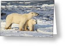 Polar Bear Mother And Cub Greeting Card