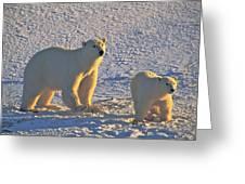 Polar Bear Mother And Cub On Ice Greeting Card