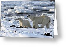 Polar Bear Mother And Cub Sniffing The Air Greeting Card
