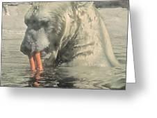 Polar Bear Snacking Greeting Card