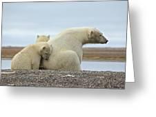 Polar Bear Snuggle Greeting Card