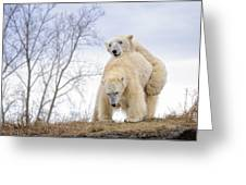Polar Bear Spring Fling Greeting Card
