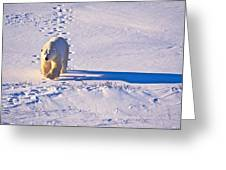 Polar Bear Tracks Greeting Card