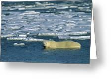 Polar Bear Wading Along Ice Floe Greeting Card