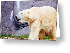 Polar Bear Walking Greeting Card