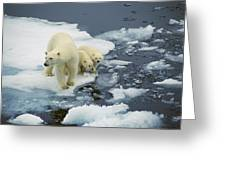 Polar Bear With Cubs On Pack Ice Greeting Card