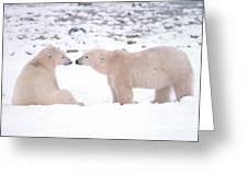 Polar Bears Introducing Themselves Greeting Card