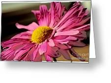 Polaroid Pink Daisy Greeting Card