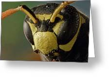 Polistes Dominula 41 Greeting Card