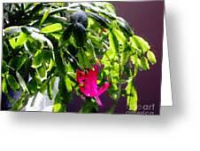 Polka Dot Easter Cactus Greeting Card