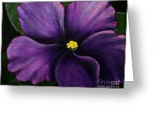 Polka Dot Purple African Violet Greeting Card