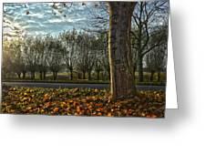 Pollard Willows In Rotterdam Greeting Card