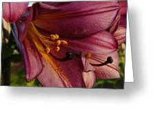 Pollen Dust Greeting Card