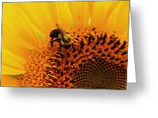 Pollen Jock Greeting Card