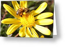Pollen-laden Bee On Yellow Daisy Greeting Card