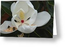 Pollen Party Greeting Card