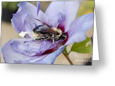 Pollen Passion Greeting Card