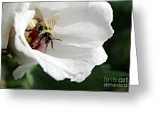 Pollenated Bumblebee Greeting Card