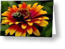 Pollenating Bumblebee Greeting Card