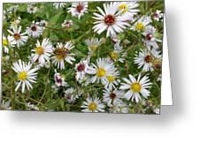 Pollenation Greeting Card