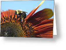 Pollinating Sunflower Seeds Greeting Card