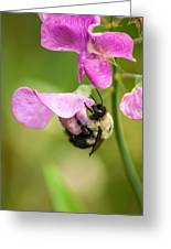 Pollination Nation Viii Greeting Card