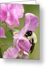 Pollination Nation X Greeting Card