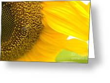 Pollination On Sunflower Greeting Card