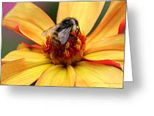 Pollinator  Greeting Card by Melisa Meyers