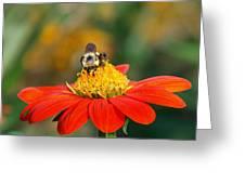Pollinator Greeting Card