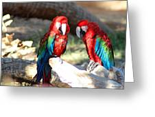 Polly And Pauly Greeting Card