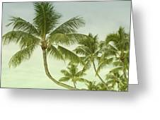 Polynesia Palm Trees Greeting Card