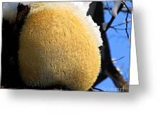 Pom Pom Mushroom Greeting Card