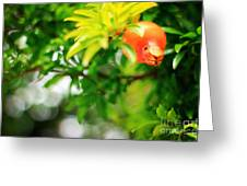 Pomegranate On A Tree Greeting Card
