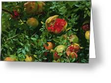 Pomegranates    Majorca Greeting Card