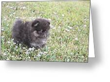 Pomeranian Alert Puppy Greeting Card